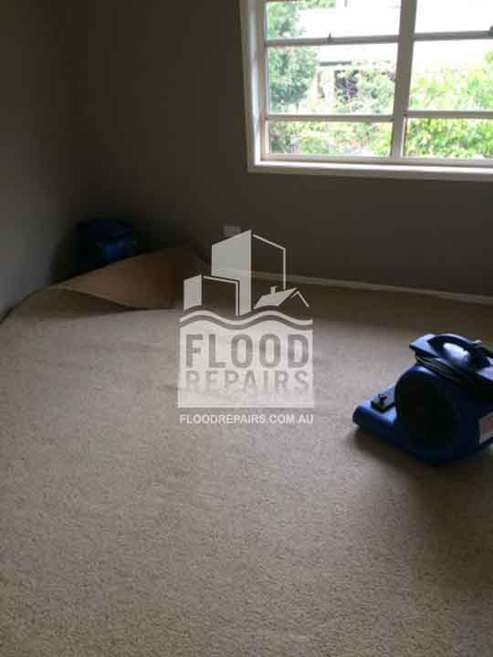 Floreat carpet after cleaning and drying