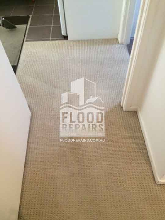 Sydney cleaned carpet after completing flood repairs job