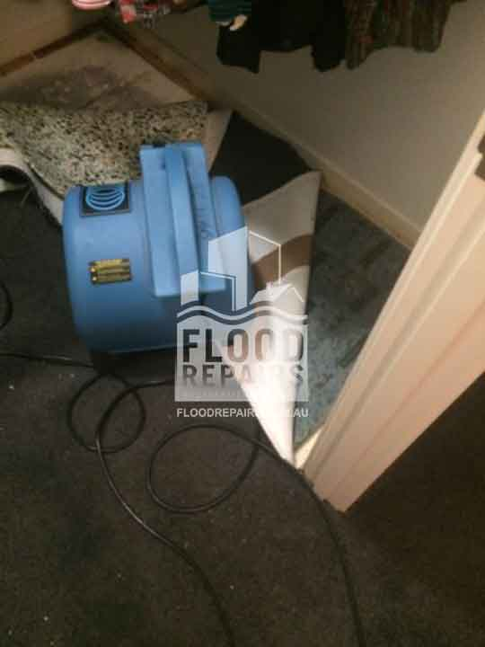 Beaumon cleaning black dirty carpet during flood repairs job