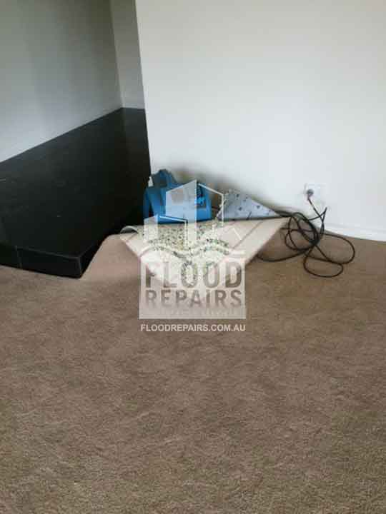 brown carpet during cleaning