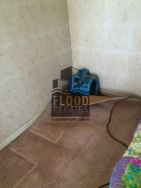 wet dirty carpet and walls before Flood Restoration & Repairs job